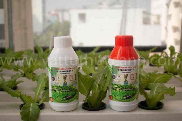 Dung dịch thủy canh cho rau ăn lá