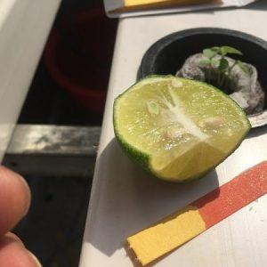 Giấy đo PH cho dung dịch thủy canh