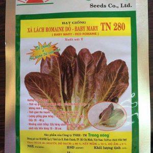 Hạt giống xà lách tím