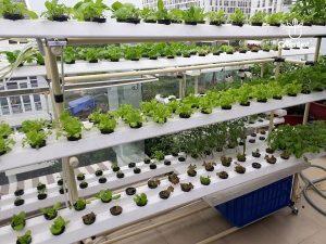 Giàn trồng thủy canh tại nhà tích hợp công nghệ cao