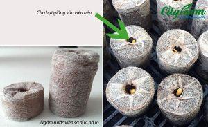 Viên nén ươm hạt xơ dừa