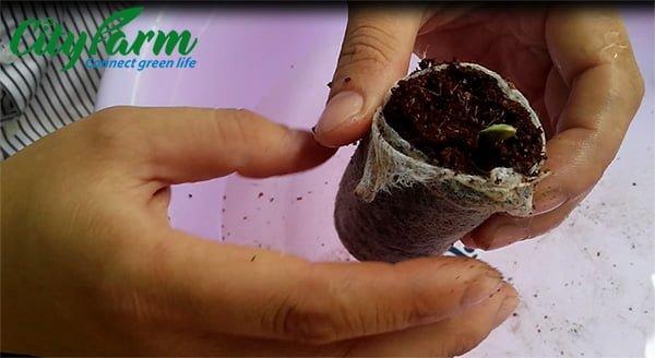 cách sử dụng viên nén ươm hạt xơ dừa
