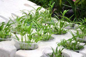 Xác định trước trồng loại rau gì